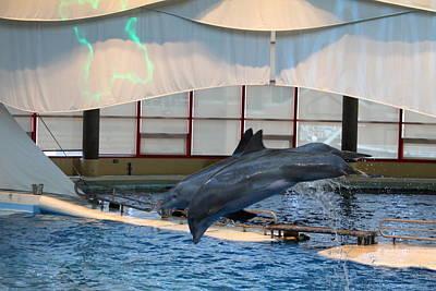 Dolphin Show - National Aquarium In Baltimore Md - 121284 Art Print