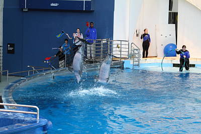 Dolphin Show - National Aquarium In Baltimore Md - 121291 Art Print by DC Photographer