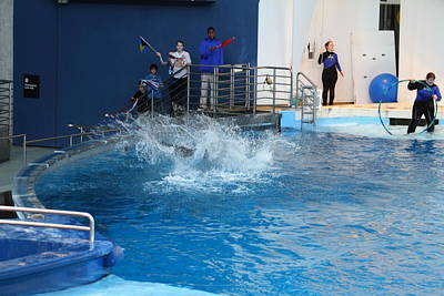 Dolphin Show - National Aquarium In Baltimore Md - 121293 Art Print by DC Photographer