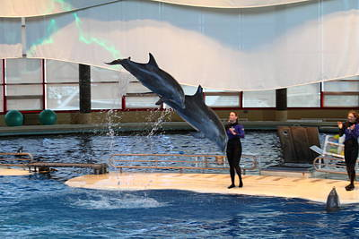 Dolphin Show - National Aquarium In Baltimore Md - 121294 Art Print
