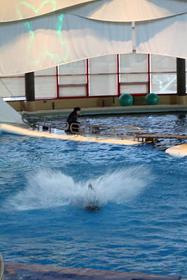 Dolphin Show - National Aquarium In Baltimore Md - 121297 Art Print