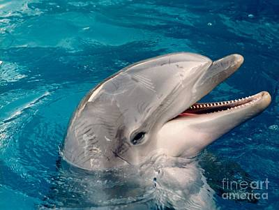 Dolphin Smile Art Print by D Hackett