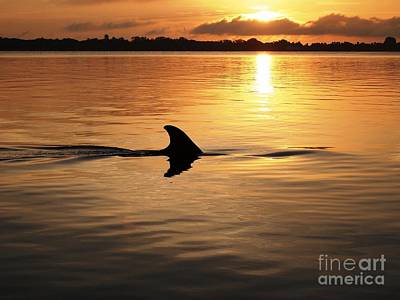 Dolphin Sunrise Art Print by Fred Benavidez