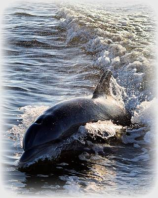 Photograph - Dolphin Surf Rider 1 by Sheri McLeroy