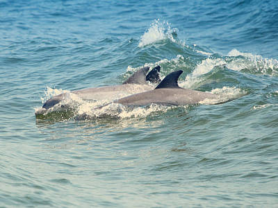 Photograph - Dolphin Trio by Pete Federico
