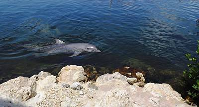 Photograph - Dolphin Watch by Jeanne Donnelly