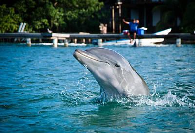 Dolphine Photograph - Dolphin by Zina Zinchik