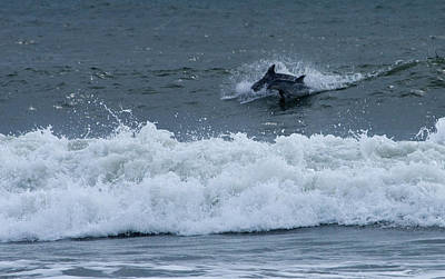 Art Print featuring the photograph Dolphins At Play by Greg Graham