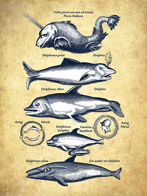 Old Wall Drawing - Dolphins - Historiae Naturalis - 1657 - Vintage by Aged Pixel