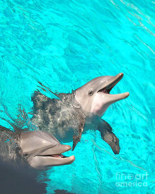 Photograph - Dolphins by Lizi Beard-Ward