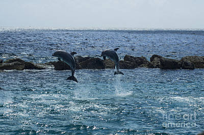 Photograph - Dolphins by Louise Magno