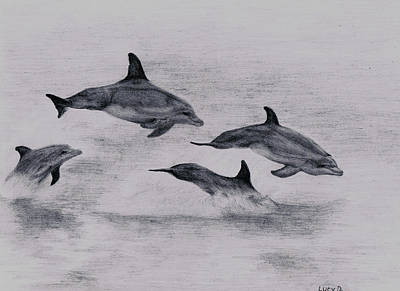 Drawing - Dolphins by Lucy D