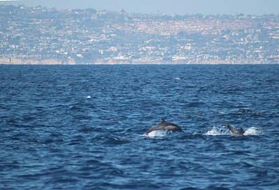 Dolphins Off The San Diego Coast Art Print by Valerie Broesch