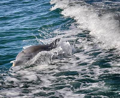 Photograph - Dolphins Smile by Kristina Deane