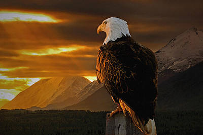 Bald Eagle Photograph - Domain by Ron Day