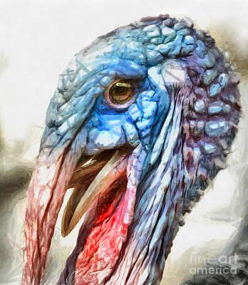 Drawing - Domestic Bird - Turkey Drawing by Daliana Pacuraru