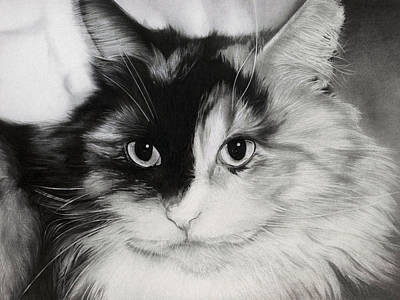 Eyes Detail Drawing - Domestic Cat by Natasha Denger