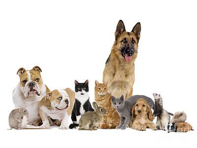 Domestic Mammal Pets Art Print