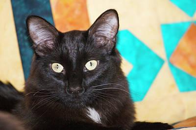 Domestic Shorthair Black Cat Sitting Art Print