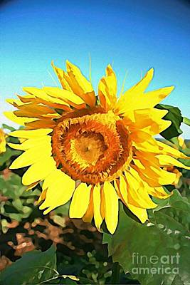 Photograph - Dominant Sunflower by Joan McArthur