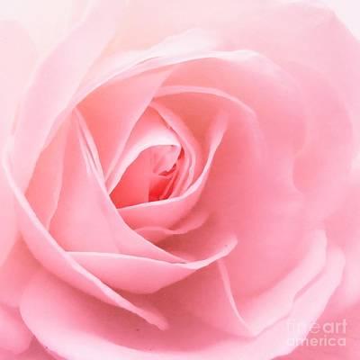 Donation Rose Art Print