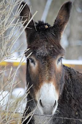 Photograph - Donkey by Bonfire Photography