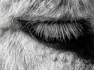 Photograph - Donkey Eyelashes by Judi Bagwell