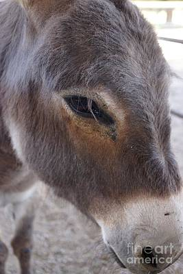 Photograph - Donkey Face by Kerri Mortenson