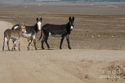 Donkey Foal Photograph - Donkey Family by Juli Scalzi