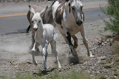 Donkey Family On The Move Original