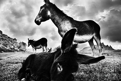 Donkey Foal Photograph - Donkey Family by Yuri Santin