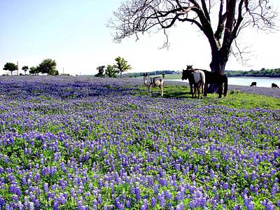 Photograph - Donkey Horses Bluebonnets by Linda Cox