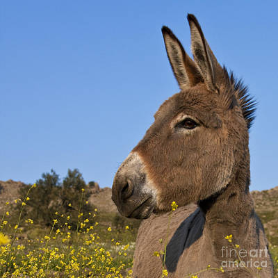 Photograph - Donkey In Greece by Jean-Louis Klein and Marie-Luce Hubert