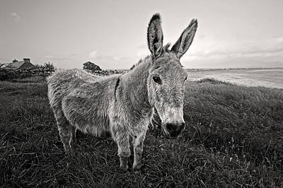Photograph - Donkey In Ireland by Pierre Leclerc Photography