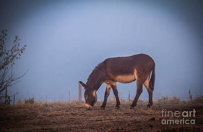 Donkey In The Fog Art Print by Robert Bales