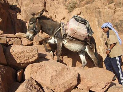 Donkey Of Mt. Sinai Art Print