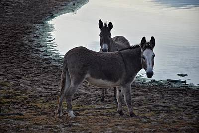 Photograph - Donkey Pair by Ricardo J Ruiz de Porras