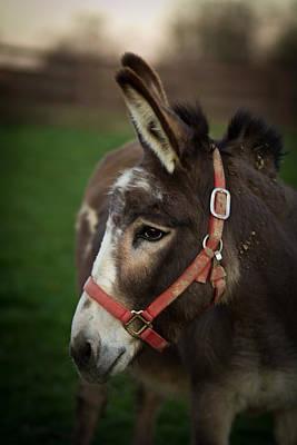 Donkey Photograph - Donkey by Shane Holsclaw