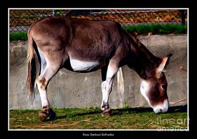 Animals Photograph - Donkey With Oil Painting Effect by Rose Santuci-Sofranko