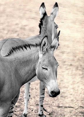 Donkeyflected Art Print by Bill Tiepelman