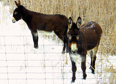 Photograph - Donkeys In Winter by Jim Vance