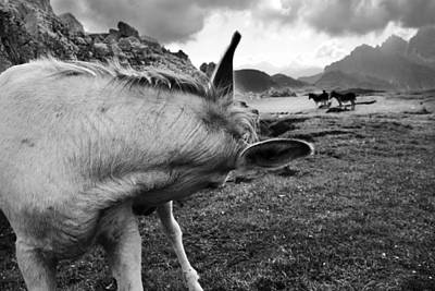 Donkey Photograph - Donkeys by Yuri Santin
