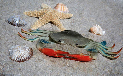 Photograph - Don't Be Crabby - Life's A Beach by Donna Kennedy
