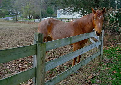 Photograph - Don't Fence Me In by Denise Mazzocco