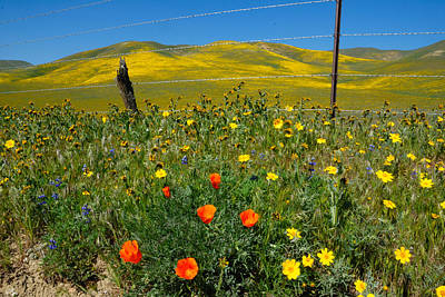 Poppies Photograph - Don't Fence Me In by Lynn Bauer
