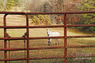 Photograph - Don't Fence Me In by Mary Carol Story