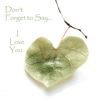 Photograph - Don't Forget To Say... I Love You by Gray  Artus