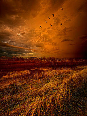 Fall Leaves Photograph - Don't Let Go by Phil Koch
