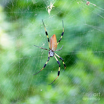 Golden Orb Photograph - Don't Look Up by Carol Groenen