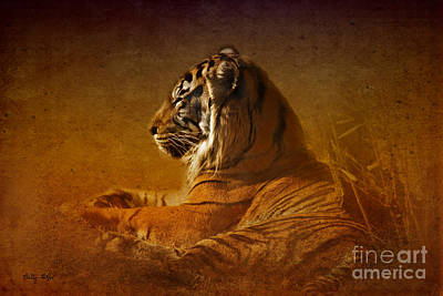 Don't Wake A Sleeping Tiger Print by Betty LaRue
